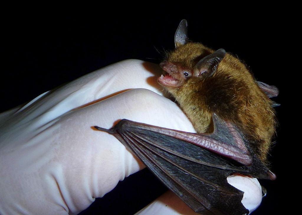 Happy Bat Week!