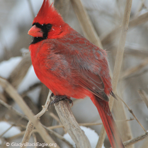 Christmas Bird Count 2020-2022 ICEC – Page 2 – Iowa Conservation Education Coalition